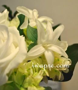いわもとプリはな プリザーブドフラワー専門 ショップ教室 ローズ以外のお花もお取扱いしております。チューベローズ
